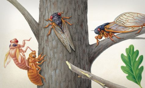 Illustration by the Scientific American